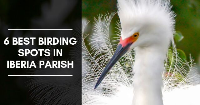 6 Best Birding Spots in Iberia Parish