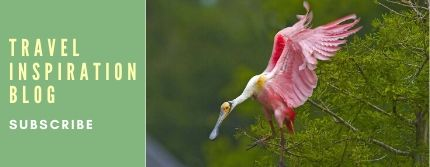 Subscribe to Iberia Travel Blog roseate spoonbill image