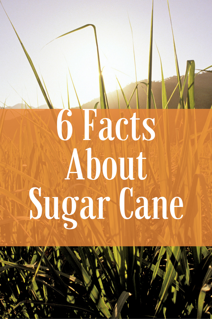 Six facts about sugar cane