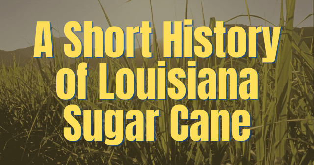 Louisiana sugarcane history