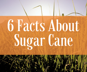 6 Facts about Sugar Cane