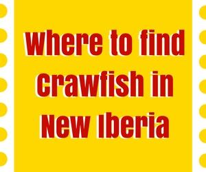 Where to Find Crawfish in New Iberia