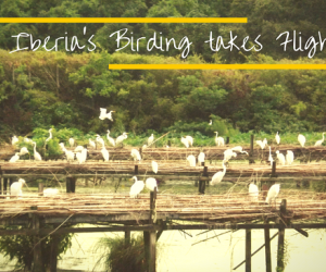 Birding in Iberia Parish