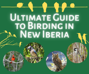 Ultimate Guide to Birding in New Iberia, Louisiana