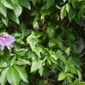 Floral Bloom - Courtesy of Iberia Parish CVB