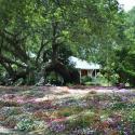 Rip Van Winkle Gardens Jefferson Island - Courtesy of Rip Van Winkle Gardens