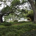 Rip Van Winkle Gardens Lake View  Jefferson Island - Courtesy of Rip Van Winkle Gardens