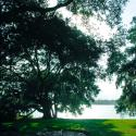 Rip Van Winkle Gardens Lake View Jefferson Island vert - Courtesy of Iberia Parish CVB